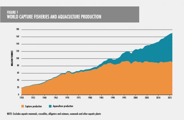 Erhvervsfiskeri og produktion af fisk